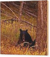 Black Bear Sticking Out Her Tongue  Wood Print