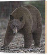 Black Bear Wood Print by Tom Wilbert