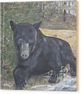 Black Bear - Wildlife Art -scruffy Wood Print