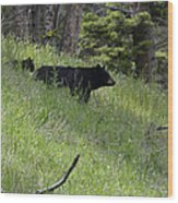 Black Bear With Cub Symetrical On Hillside Wood Print