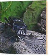 Black Beetle Wood Print