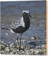 Black-bellied Plover No.2 Wood Print