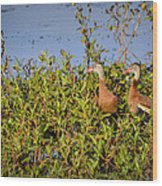 Black-bellied Whistling Ducks Wood Print