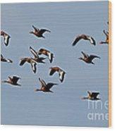 Black-bellied Whistling Ducks In Flight Wood Print