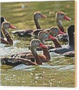 Black-bellied Whistling Ducks Wood Print