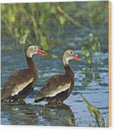 Black-bellied Whistling Ducks Wading Wood Print