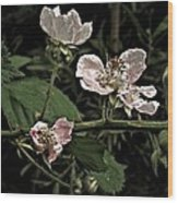 Black Berry Blossoms Wood Print by Elery Oxford