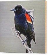 Black Bird Wood Print by Athena Mckinzie