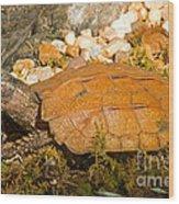 Black Breasted Leaf Turtle Wood Print
