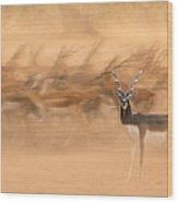 Black Bucks Wood Print