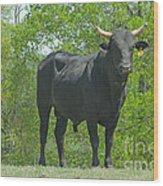 Black Bull Wood Print