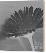 Black Buttercup Wood Print