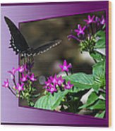 Black Butterfly 07 Wood Print