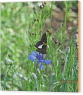 Black Butterfly Wood Print