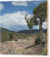Black Canyon Juniper Wood Print