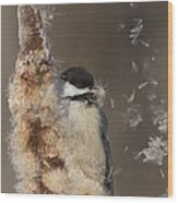 Black-capped Chickadee In Winter Wood Print by Mircea Costina Photography