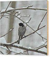 Black Capped Chickadee - Poecile Atricapillus Wood Print