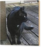 Black Cat On Porch Wood Print