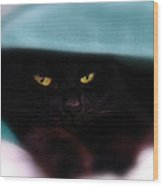 Black Cat Secrets Wood Print