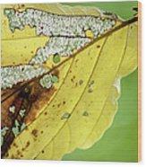 Black Cherry Leaf Wood Print