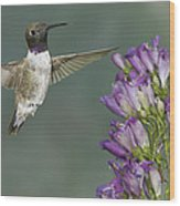 Black Chinned Hummingbird 2 Wood Print