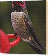 Black Chinned Male Hummingbird Wood Print