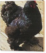 Black Cochin Wood Print
