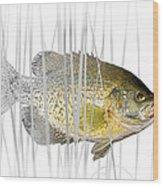 Black Crappie Pan Fish In The Reeds Wood Print