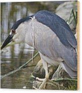 Black-crown Heron Going Fishing Wood Print