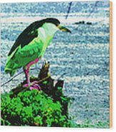 Black Crowned Green Night Heron Wood Print