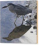 Black Crowned Night Heron And Shadow Wood Print