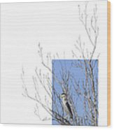 Black-crowned Night-heron Wood Print