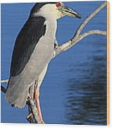 Black Crowned Night Heron Wood Print