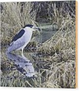 Black Crowned Night Heron Wood Print