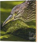 Black Crowned Night Heron Pictures 115 Wood Print