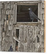 Black Crows At The Old Barn Wood Print