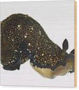 Black Dendrodoris Nudibranch Wood Print