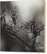Black Edlerberry Bush Wood Print
