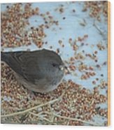 Black Eyed Junco Wood Print