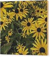 Black-eyed Susan - Rudbeckia Hirta  Wood Print