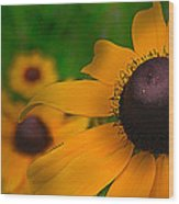 Black Eyed Susan Wood Print by Brittany Perez