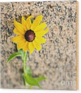 Black-eyed Susan Flower On A Gneiss Rock Wood Print