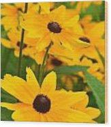 Black Eyed Susan - Flower Wood Print