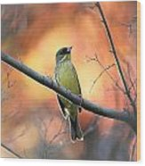 Black-faced Bunting Wood Print