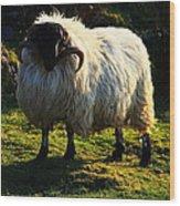 Black Faced Mountain Sheep Wood Print
