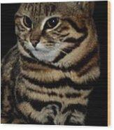 Black-footed Cat Wood Print