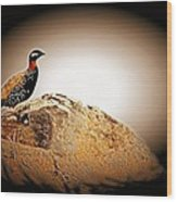 Black Francolin Wood Print