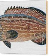 Black Grouper Wood Print