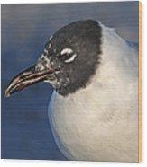 Black Headed Gull Portrait Wood Print