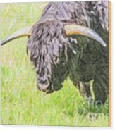 Black Highland Cattle Bull Wood Print